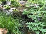 庭のビオトープ