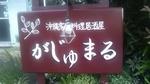 がじゅまる1.jpg