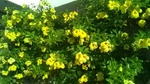 さわやか荘黄色い花.jpg