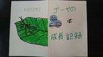 カマキリ・ゴーヤ成長記録 (1).jpg
