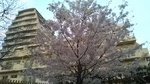 桜(ライオンズマンション).jpg